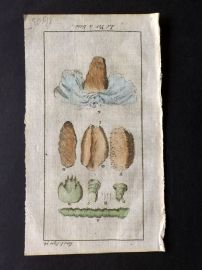 Pluche 1756 Hand Col Print. Silkworm Insect